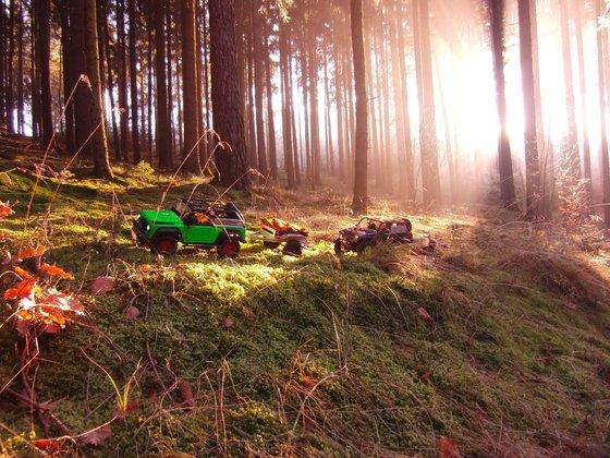 Dingo und Rubi mit Anhänger im Wald zum Zapfensammeln