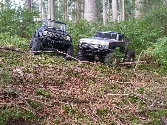 Wald crawlen