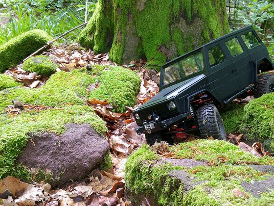 sGaler im Wald