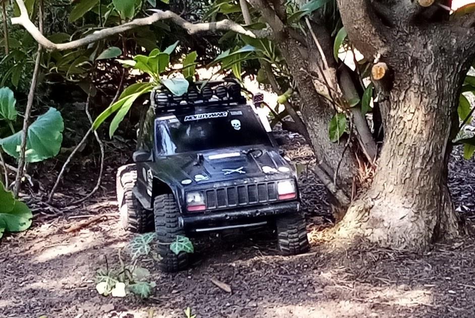 Der FreeMan unterwegs im Mammutwald