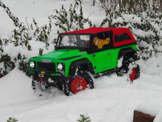 Dingo im Schnee