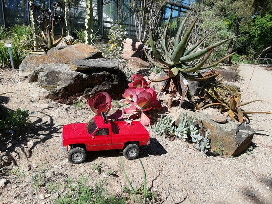 Sonoran Wüsten Expedition